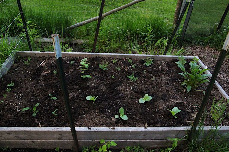 Herb bed 2