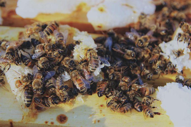 Lost hive