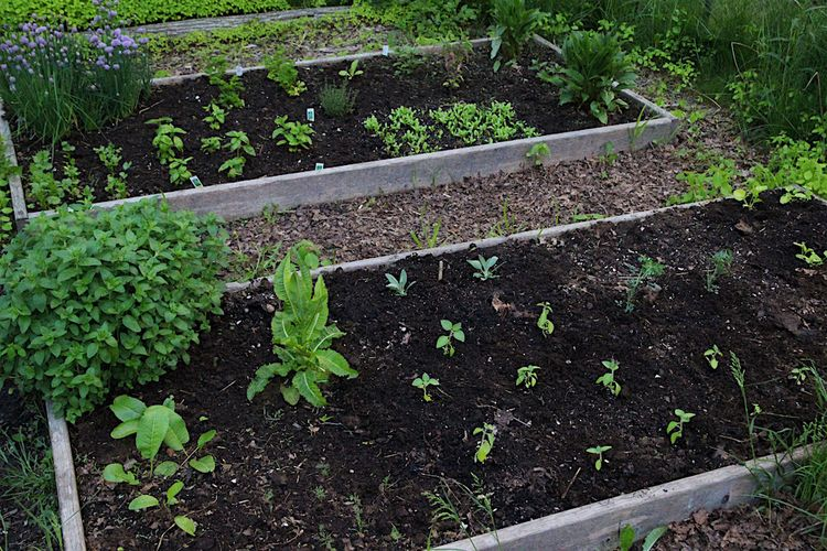 Herb bed 3