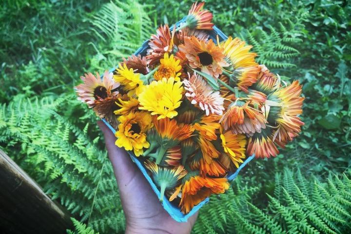 sweetbrier farm calendula flower
